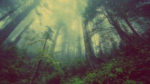 Beetsterzwaag Natuur